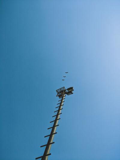Trio Birds Sky Blue Nature