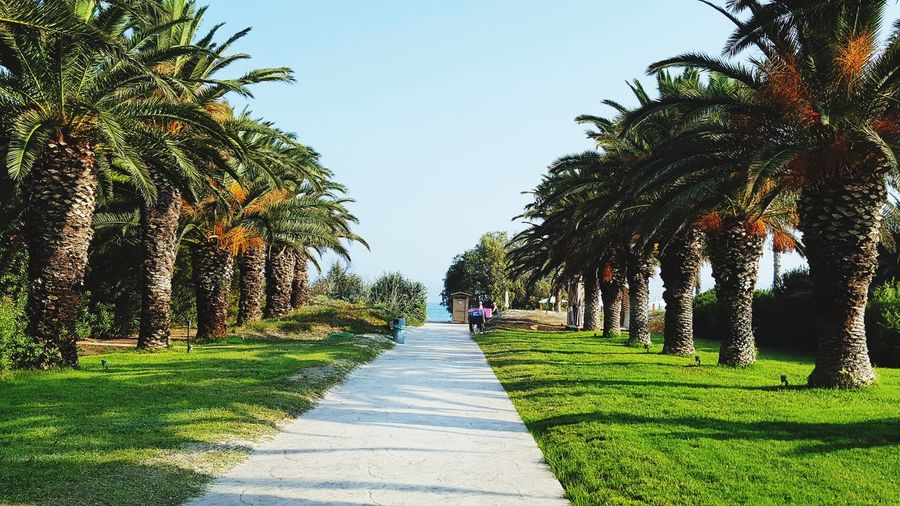 Rear view of people walking on walkway amidst palm trees in park