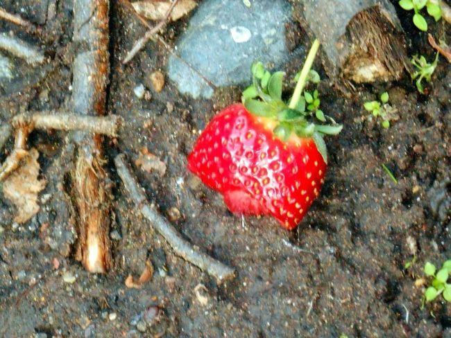 Strawberry Surprise