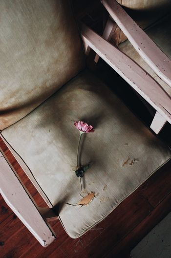 High angle view of pink flower on table