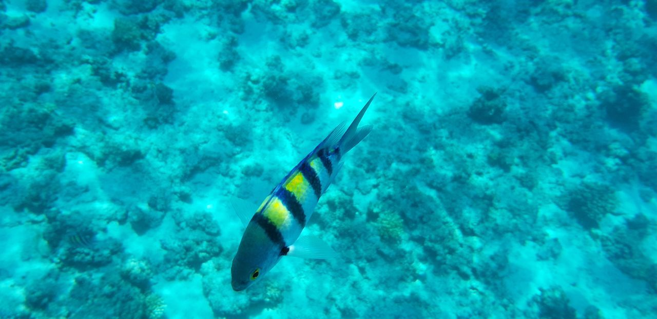 Animal Animal Themes Animal Wildlife Animals In The Wild Blue Coral Fish Invertebrate Marine Nature One Animal Reef Sea Sea Life Swimming Turquoise Colored UnderSea Underwater Vertebrate Water