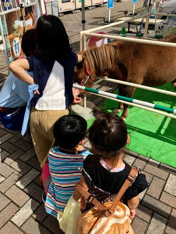 Some Children Looking at a Pony with Interest. (180922-181015) Real People Lifestyles High Angle View Day Casual Clothing Group Of People Rear View Adult Child Standing Sitting Leisure Activity Nature Sunlight Outdoors
