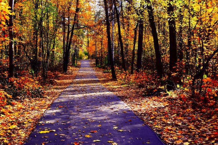 Leaf Fall. Autumn Colors Landscape_Collection Morning Nikon Road Russia Sunlight Warm Autumn Alley Autumn Beauty In Nature Fallen Leaves Foliage Forest Nature Tree Walkway Woodscapes Осень 🍁🍂 Россия краски  опавшая листва осень пейзаж