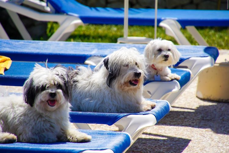 Portrait Of Dogs Relaxing Outdoors