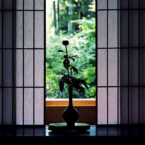 Silhouette flower vase on window sill