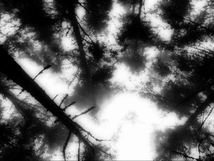 Hugging A Tree Desaturation Blackandwhite Photography Blackandwhite Anacortes Washington Fidalgoisland