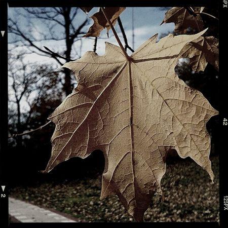 Хмурая осень осеньвгороде Осень:) Relaxing RussiaKaliningrad