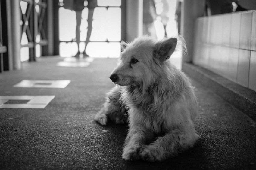 An old dog in relaxation. Chiang Mai | Thailand Thailand Black And White Blackandwhite Canine Day Dog Domestic Domestic Animals Focus On Foreground Looking Looking Away Mammal One Animal Pets Relaxation Sitting Vertebrate