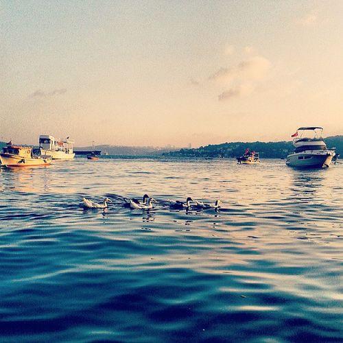 Kankalar :) Beykoz Yaliköy