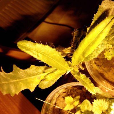 #plants #plant #колючка #бодяк #растения #растение #2013 Plants Plant 2013 растения растение колючка бодяк