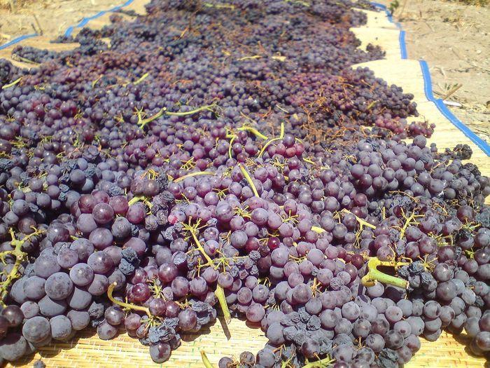 Trauben Sonne Trocknen Fruit Grape Food