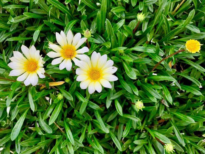 Flower Flowering Plant Plant Freshness Fragility Beauty In Nature Vulnerability