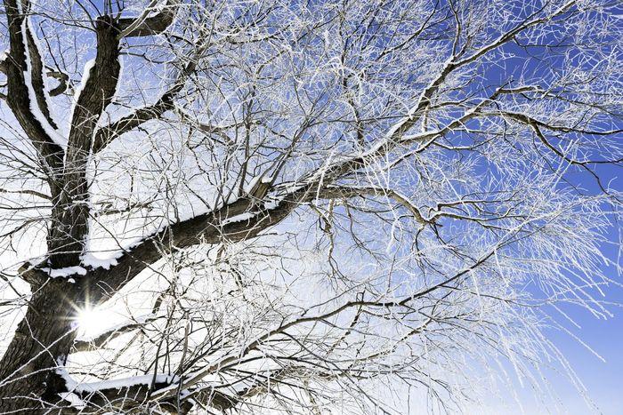 Japan Hokkaido 樹氷