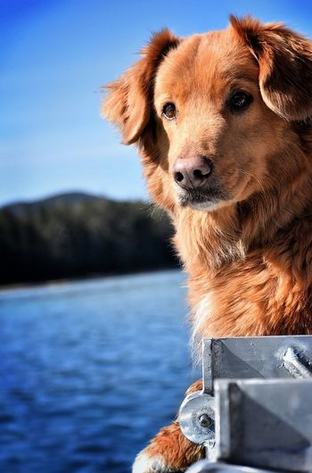 Tango. Dog Pets One Animal Water Animal Themes Domestic Animals Mammal Focus On Foreground Day No People Outdoors Nature Sea Close-up Sky Sea And Sky Novascotiaducktollingretriever Ocean Adventure EyeEm Best Shots EyeEm Nature Lover