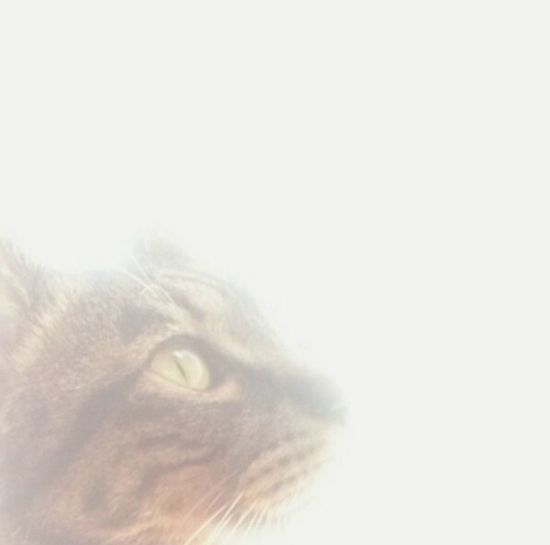 All We Need Is Love Good Morning Andrography Cat♡ Cat Lovers Cat EyeEm Animal Lover Hope.✌ The Soul SOUL SENSEI