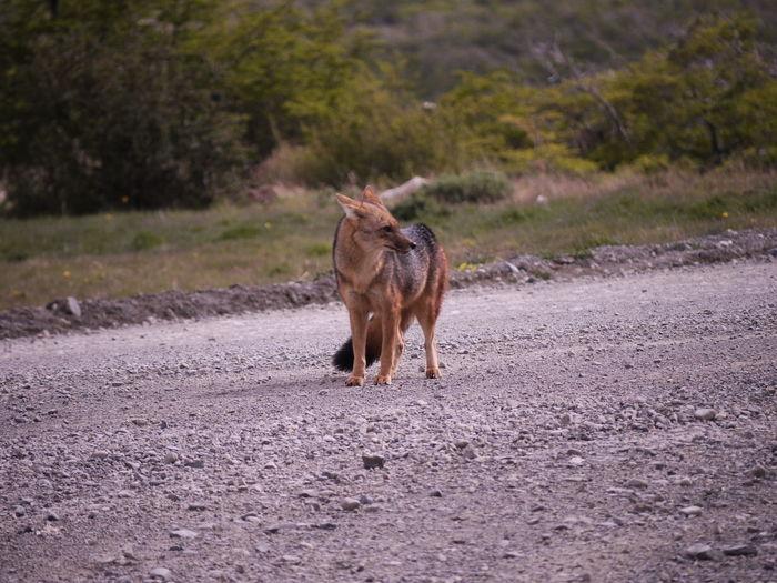 Horse walking on road