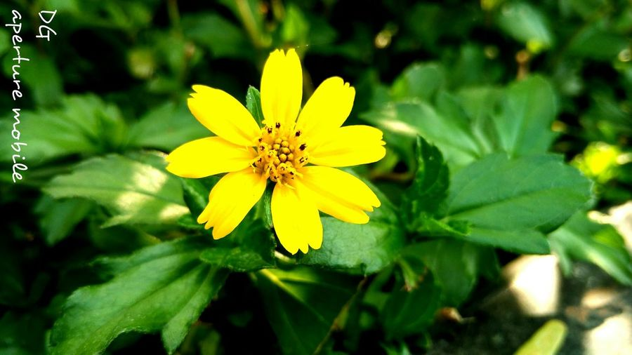 Floral Perfection Yellow Flowers Magicofnature Deceptively Simple