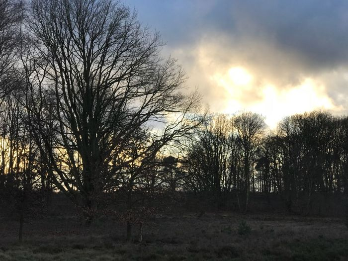 Schneverdingen Lüneburger Heide Tree Bare Tree Nature Sky No People Beauty In Nature Tranquil Scene Outdoors Sun Cloud - Sky Sunset Silhouette Day Branch Landscape Tranquility Scenics
