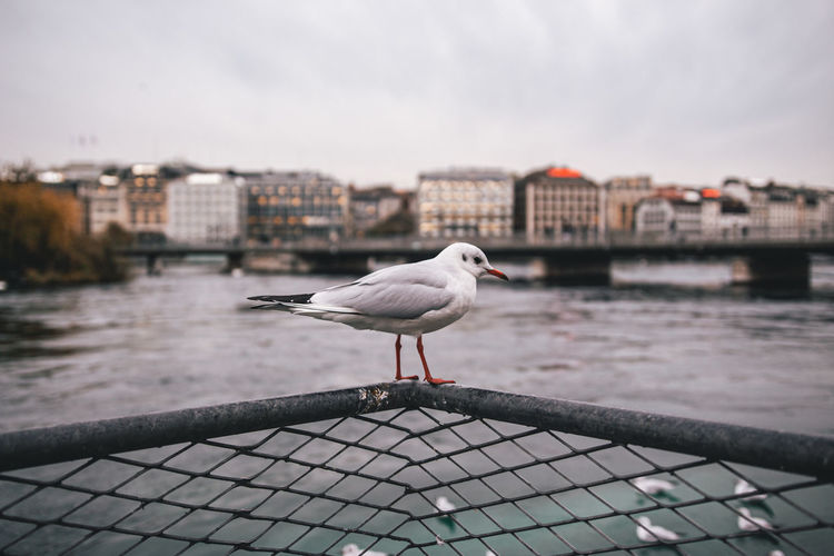 Seagull perching on a river
