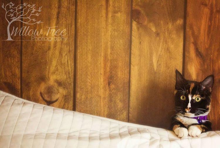 The EyeEm Facebook Cover Challenge here Kitty Kitty!  Tadaa Community