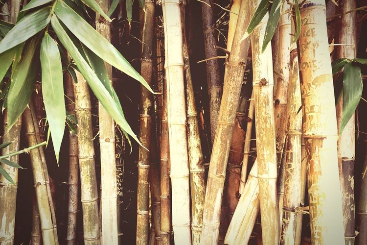 Bambu Jungle Nature Plants Wildlife & Nature Green Park Garden Leaves Trunk Tree