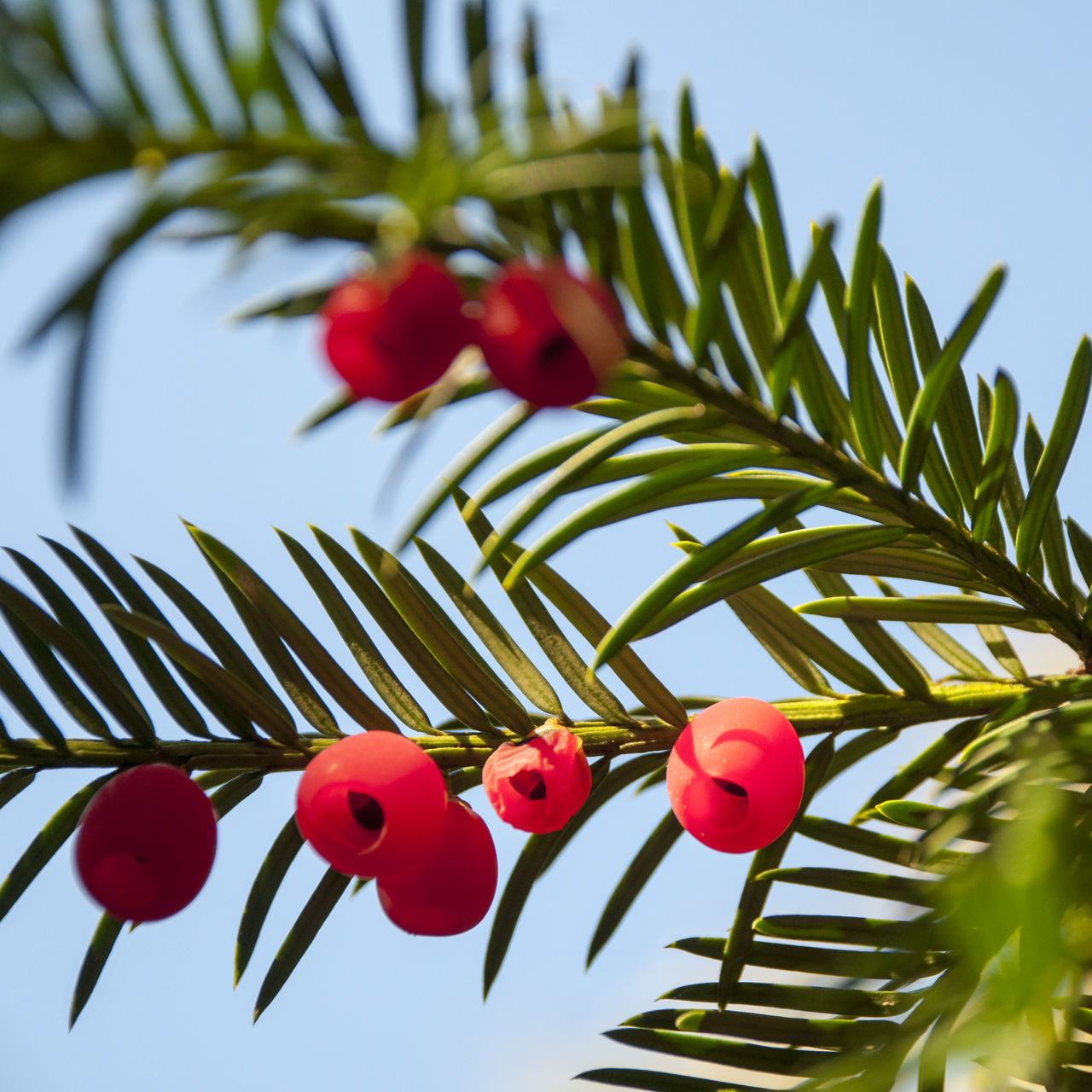 red, low angle view, tree, no people, green color, growth, nature, day, beauty in nature, branch, sky, outdoors, leaf, hanging, clear sky, flower, close-up