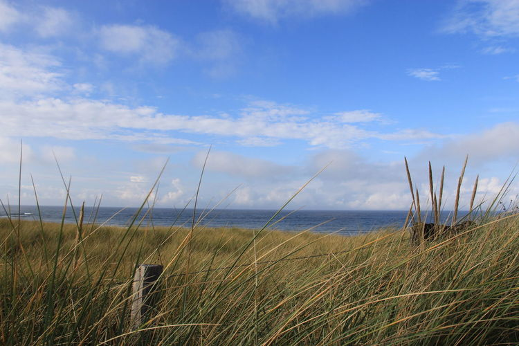 Scenic View Of Reeds Against North Sea