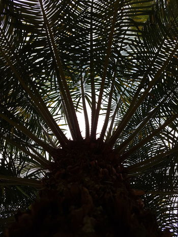 Tree Low Angle View Nature Branch Growth Palm Tree Tree Trunk