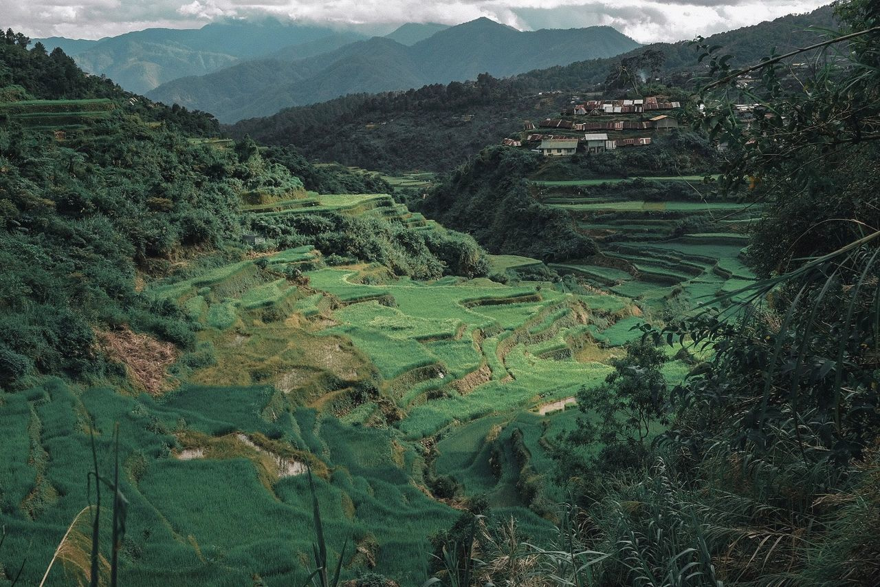HIGH ANGLE VIEW OF AGRICULTURAL LANDSCAPE AGAINST MOUNTAINS