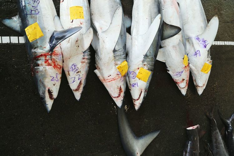 Directly above view of dead sharks for sale