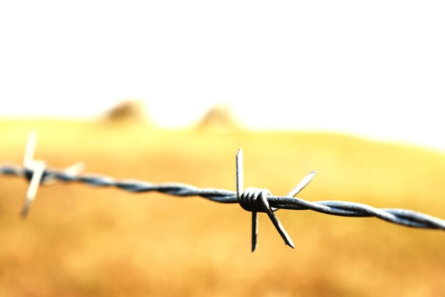 EyeEm Selects Barbed Wire Fence Safety Wire Protection Boundary Barrier Security Sharp Metal No People Focus On Foreground Warning Sign Close-up Nature Sign Sky Spiked Forbidden Outdoors The Still Life Photographer - 2018 EyeEm Awards The Creative - 2018 EyeEm Awards