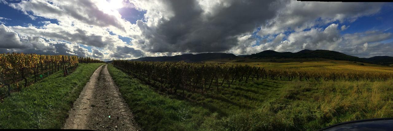 On the Route Du Vin, Alsace, France Alsace Back Roads Cloudscape Colmar Dramatic Sky France Landscape Outdoors Route Du Vin Sky Vineyard Wine