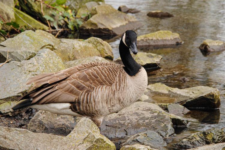 High angle view of birds on rocks at lake