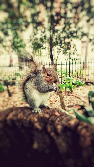 Walking in nature can sometimes be such a strong detox. Nature Selective Focus Squirrel Peace Animal Tree Trunk Trees Photography Green First Eyeem Photo My Favorite Photo