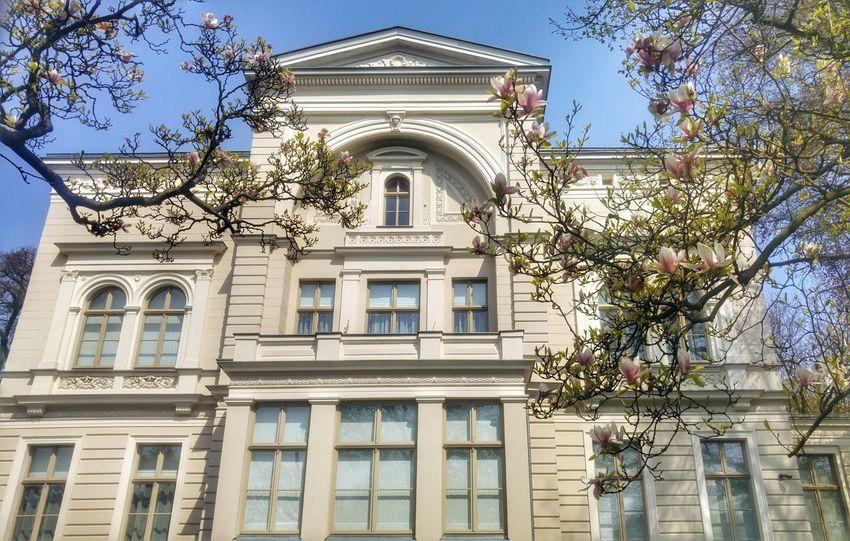 Old Hause Architecture Biały Domek Magnolie Wiosna Spacer Enjoying Life Słoneczny Dzień