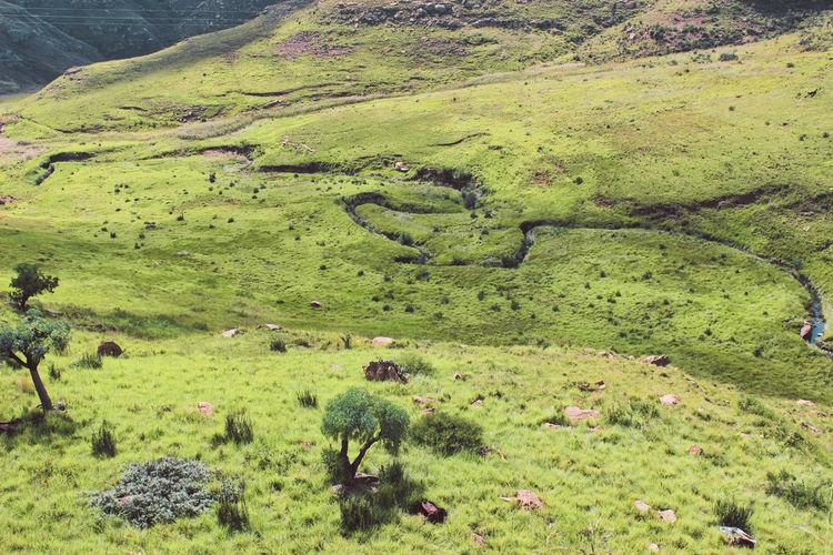 High angle view of sheep on land