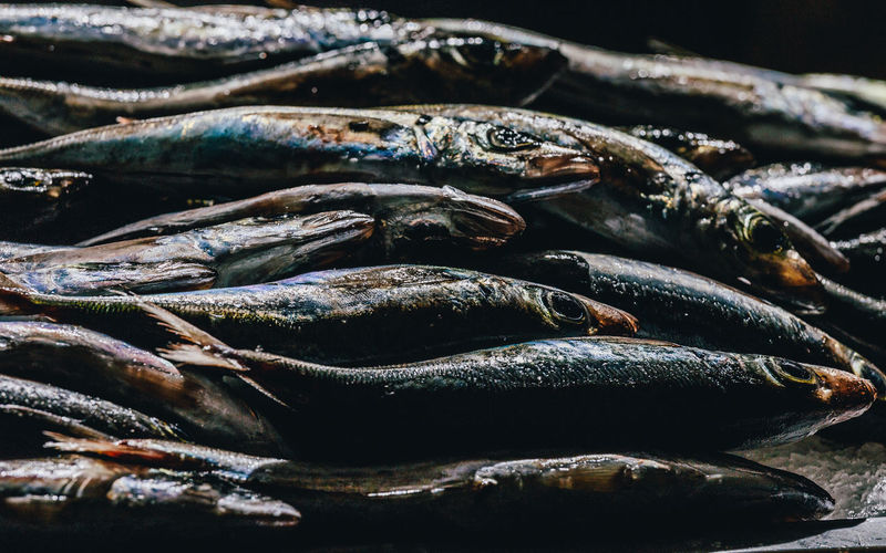 Group of freshness sardine. Diet & Fitness Freshness Freshnesss Market Seafood Animal Fish Fish Market Fishing Fishing Industry Food Healthy Healthy Eating Healthy Food Healthy Lifestyle Lifestyles No People Raw Food Retail  Sardines Wellbeing