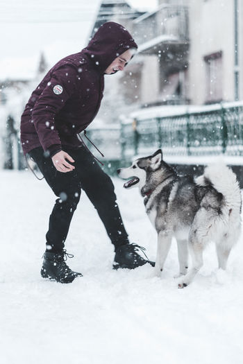 Husky Winter Snow Cold Temperature Mammal Warm Clothing One Person Real People Pets Domestic Animals Clothing Snowing Day Domestic Vertebrate One Animal Full Length Outdoors Extreme Weather