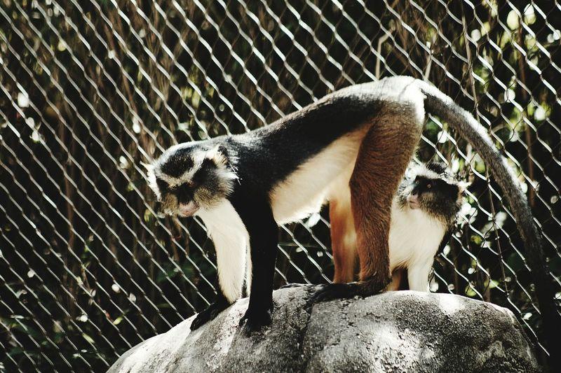 ATL Zoo Monkeys Monkeybusiness  Funny FUNNY ANIMALS