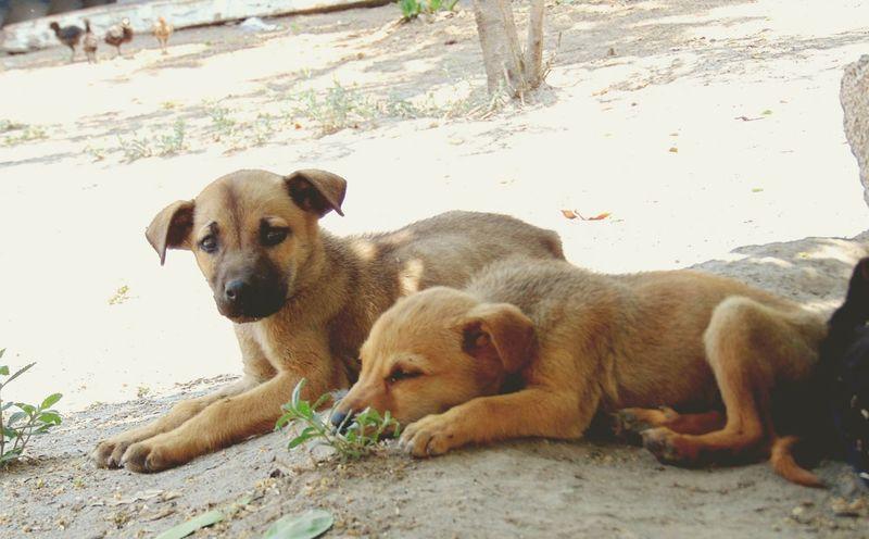Un par de hermanos👌Doggy Love Brother Dog Love Perros❤ Perros Por El Mundo Salvaje Perro Callejero Perrosgram Perrosmexico HERMANOS FOREVER♥ Cuidado