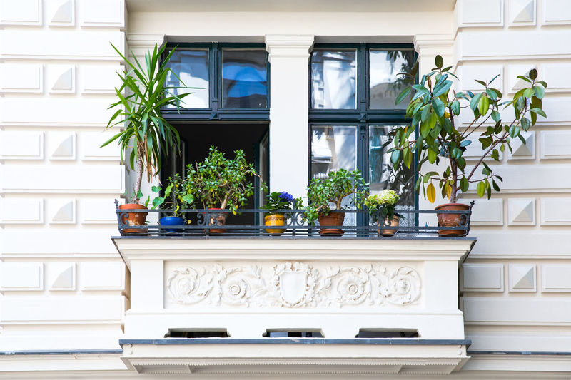 Potted plants at balcony