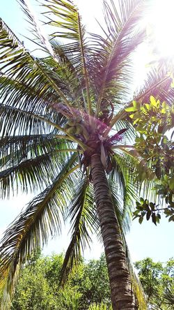 Tree Palm Tree Low Angle View Tree Trunk Sky Nature Day Beauty In Nature Outdoors Growth Tranquility Green Color No People Close-up Travel Destinations Tree Area