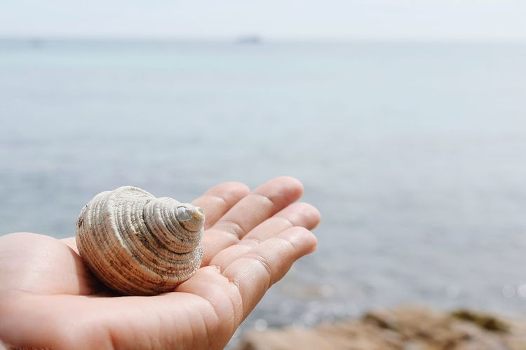 Shellfish on hand Human Hand Beach Human Body Part Sea Water One Person Day Close-up Sea Life Sand Beauty In Nature Freedom Objects Blue Vacations Outdoors Nature White Water Sea Travel Backgrounds Wave Summer Nice View