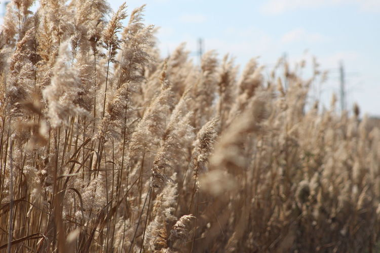 Beauty In Nature Field Focus On Foreground Grass Growing Kalahari Landscape Nature Plant Selective Focus Tranquil Scene