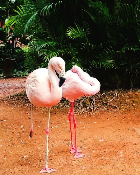 Goiana Zoophotography Zoo Animals  Zoo Love Life TBT  Nature Criation
