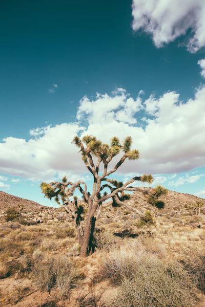 Check This Out Canon California Joshua Tree Cali Tree Outdoors Exploring