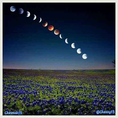 Lunar Eclipse Moon Bluebonnets Bloodmoon2014 Sky Night