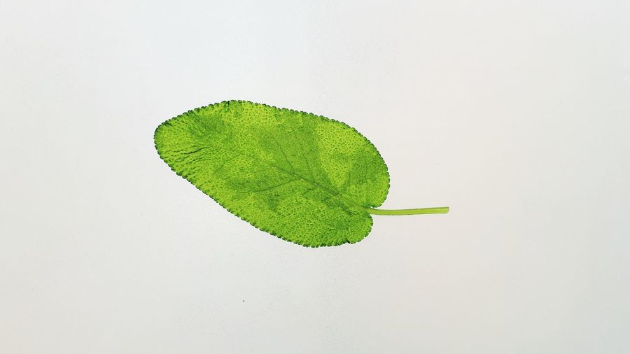 High angle view of leaves on white background