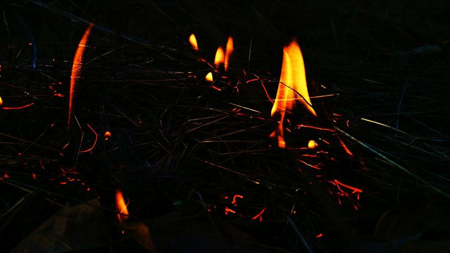 beings of fire... First Eyeem Photo Awesome EyeEm Gallery EyeEm Best Shots Awe Nature Nature_collection EyeEmNewHere Heat - Temperature Burning Glowing Close-up Entertainment Firework - Man Made Object Forest Fire Sparks