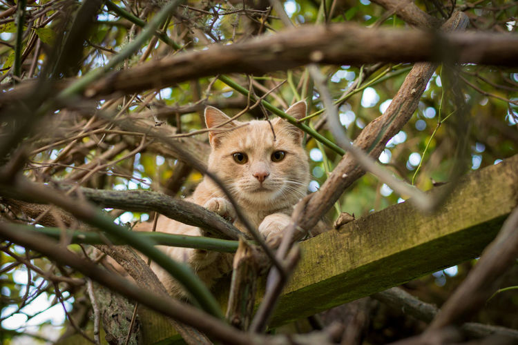 Portrait of a cat on tree